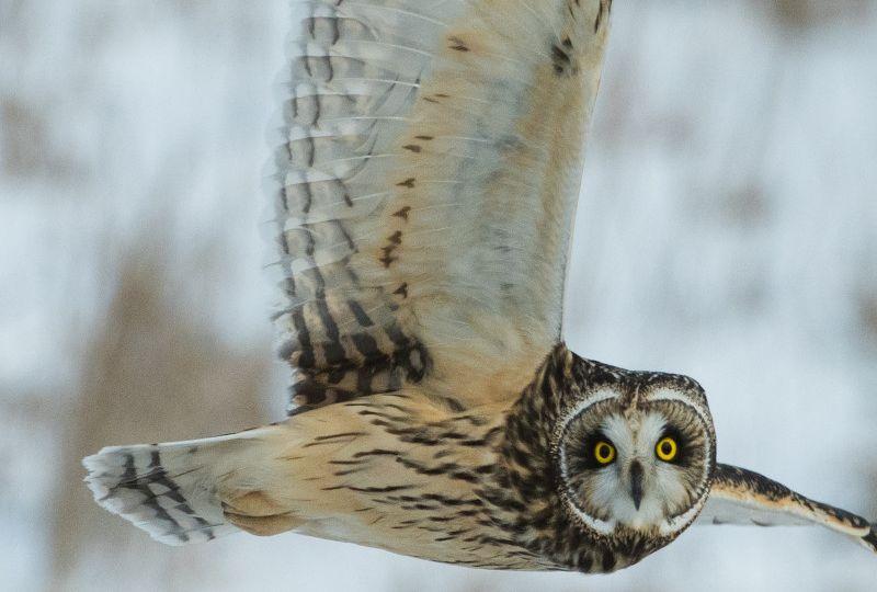 owl zsl news